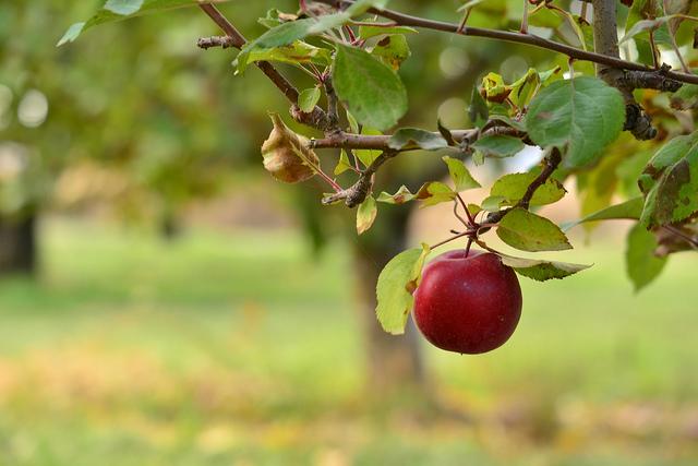 snipcart-ecommerce-fruit