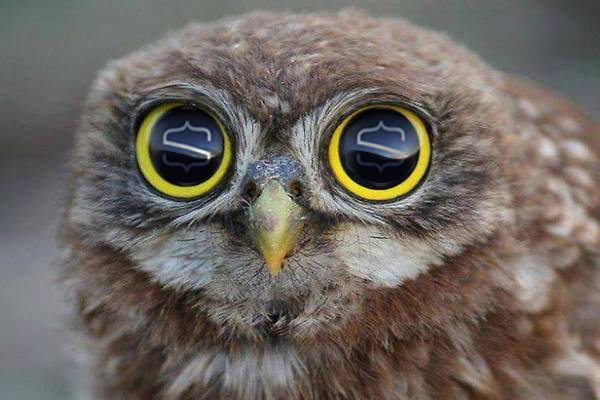 snipcart-content-product-ambassadors-owl
